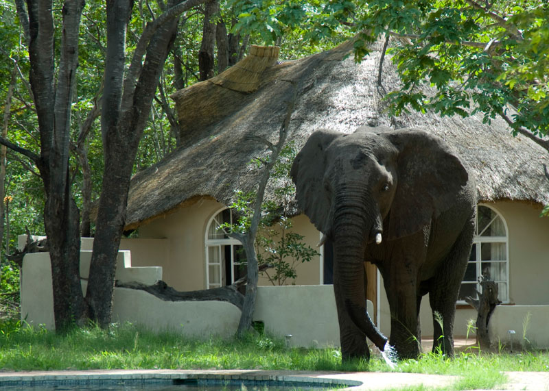 Sable Sands Elephant Lodge pool