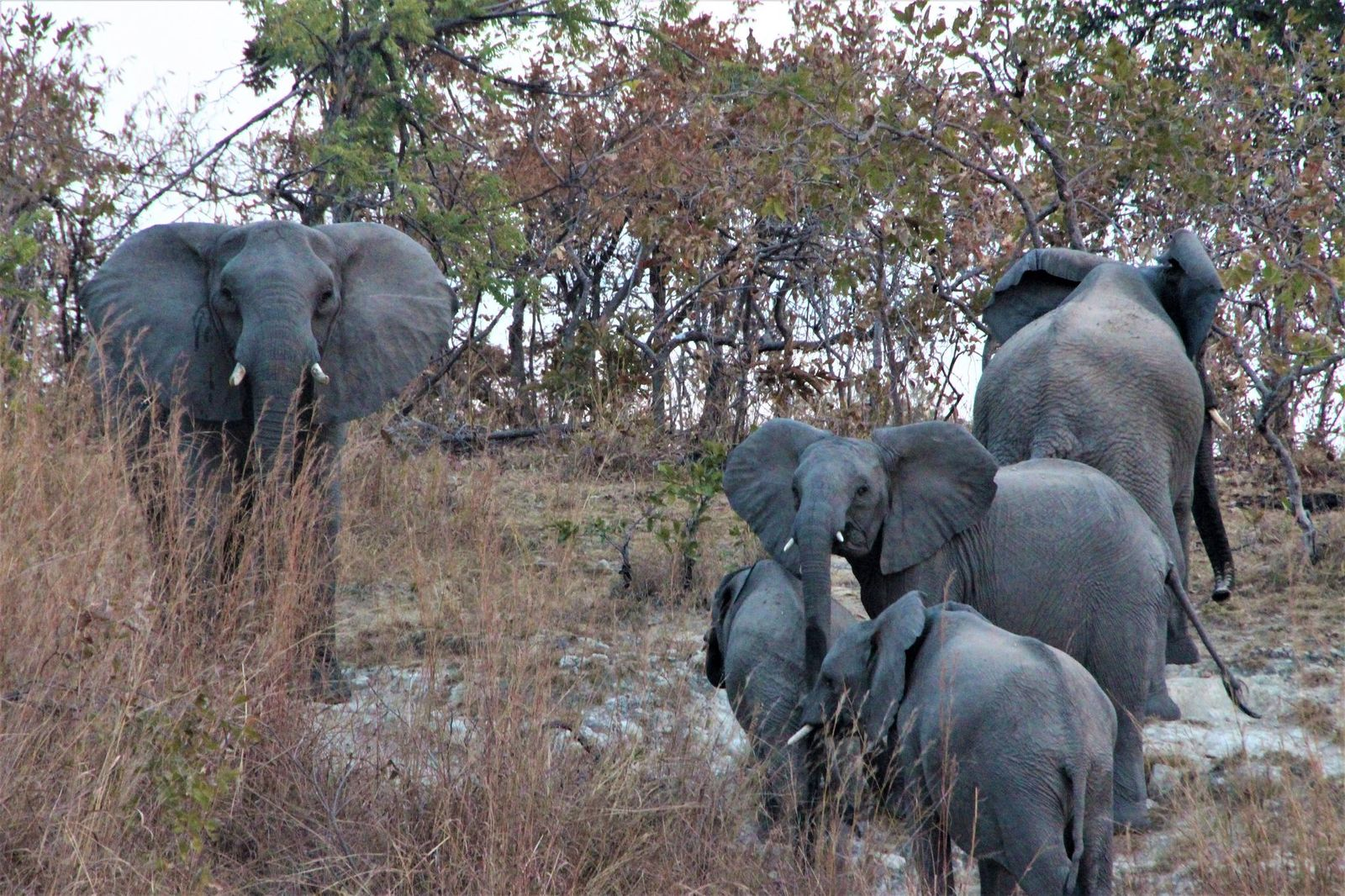 Our visit to Kafue National Park by Jackie Peel June 2020