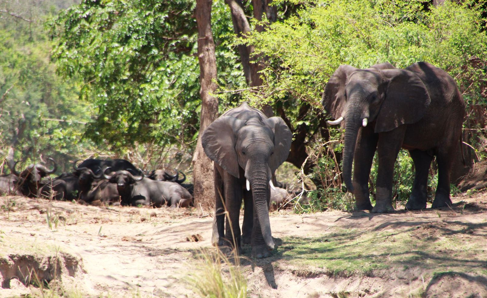 Our visit to the Lower Zambezi National Park by Vee Marffy June 2020